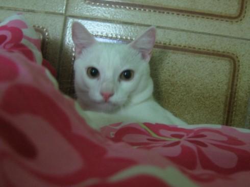 debaixo da cama da mamãe